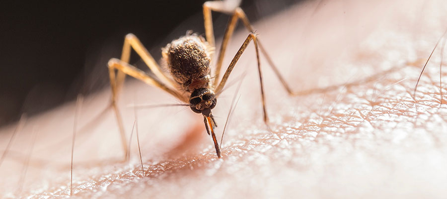 Clayton County Health District - Mosquito